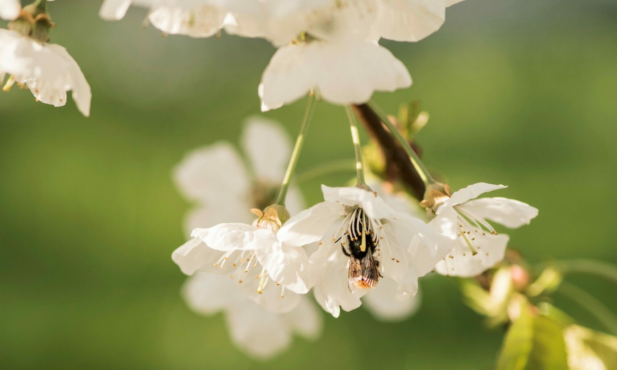 Frühlingsgeschenk